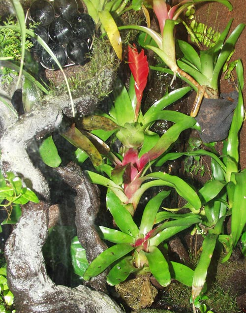 An array of bromeliads on a living wall