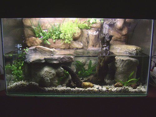 A riparium is a paludarium, typically with a water feature, such as a waterfall as seen here