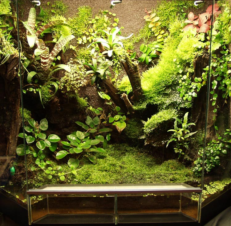 Gallery For > Paludarium 10 Gallon Paludarium