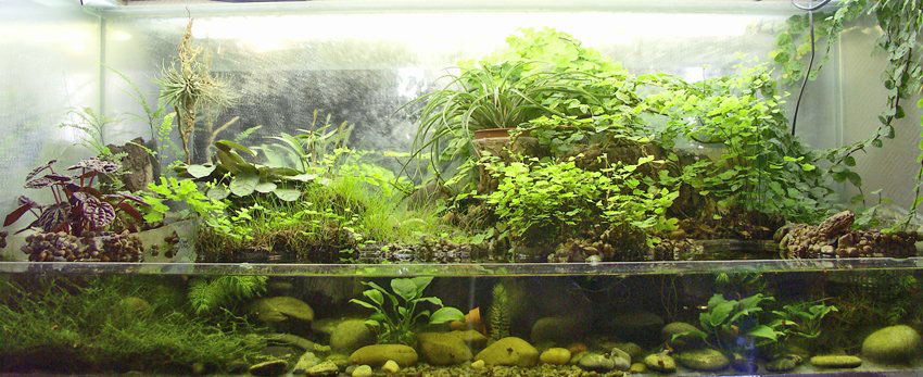 A paludarium split with land at the back, water in front