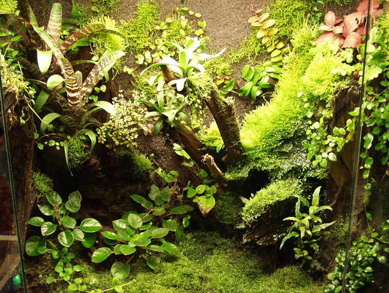 Paludarium plants in a beautifully planted rainforest installation