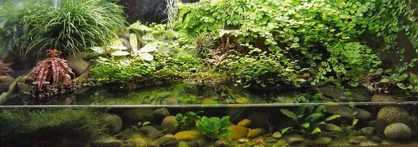 The same paludarium with a little more plant growth