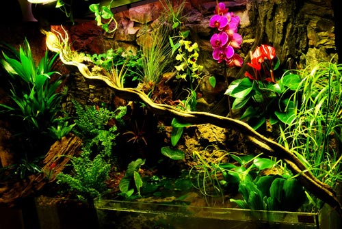 A beautiful example of a paludarium. Paludariums do not have to be planted, but can be very attractive when they are